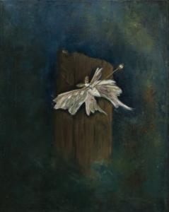 pinned moth - Kelly L Taylor